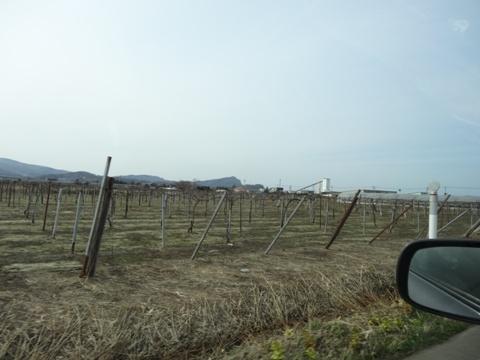 葡萄畑(2014.04.20)