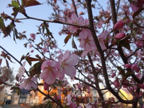 春・春・春♪03(2014.05.04)