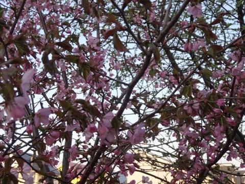 春・春・春♪04(2014.05.04)