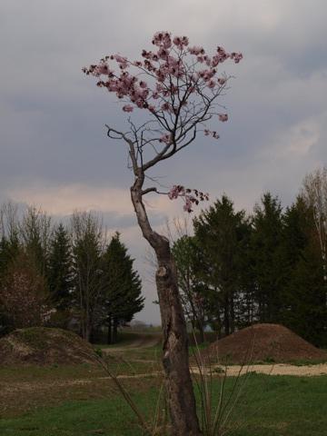 モエレ沼公園05(2014.05.07)
