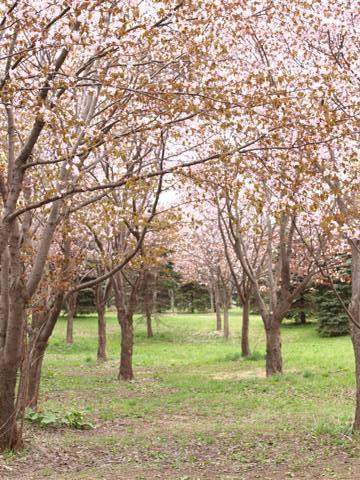 モエレ沼公園06(2014.05.07)