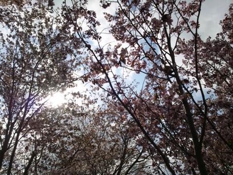 モエレ沼公園10(2014.05.07)