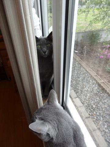 窓辺の攻防02(2014.05.26)