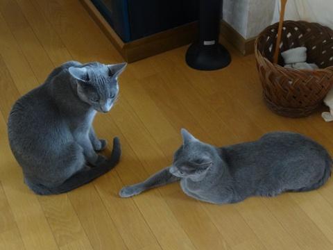 ニコアレの距離感(2014.07.26)