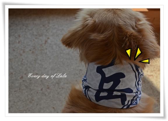 岳犬201402