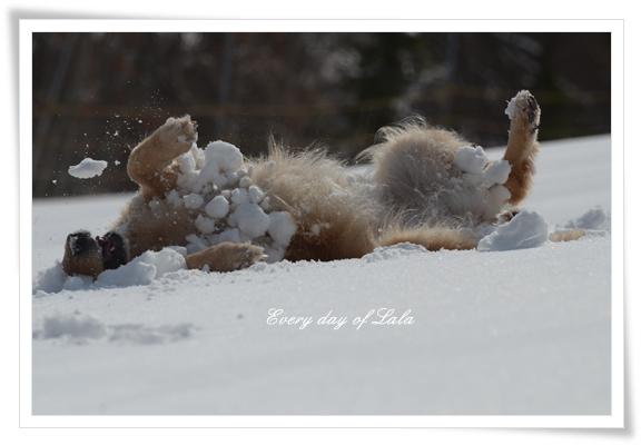 雪玉いっぱい201403