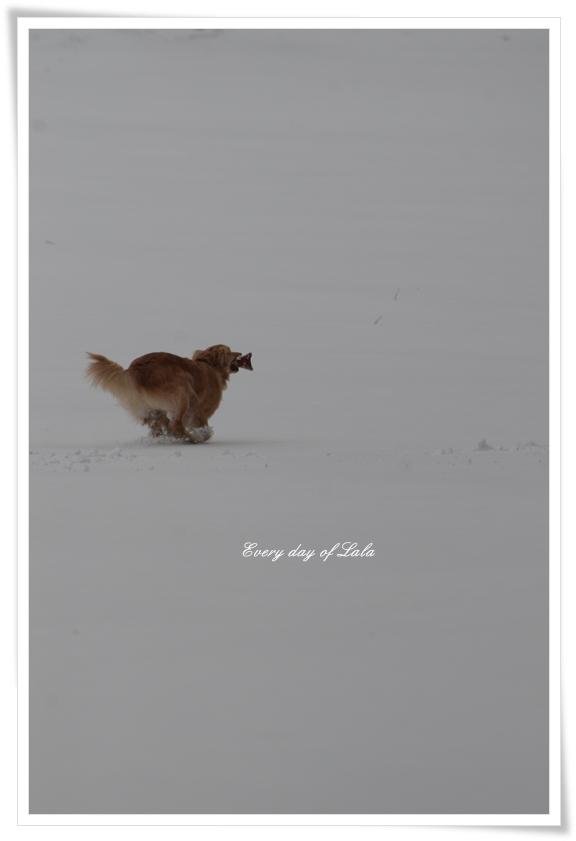 雪走る201403