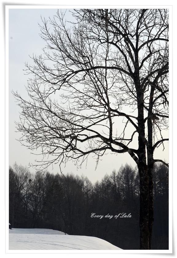 冬木201403
