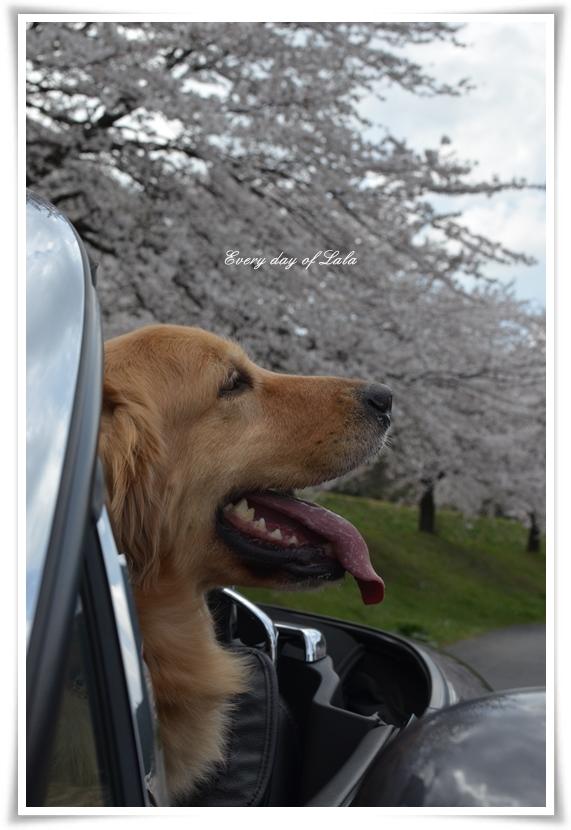 御花見アップ201404