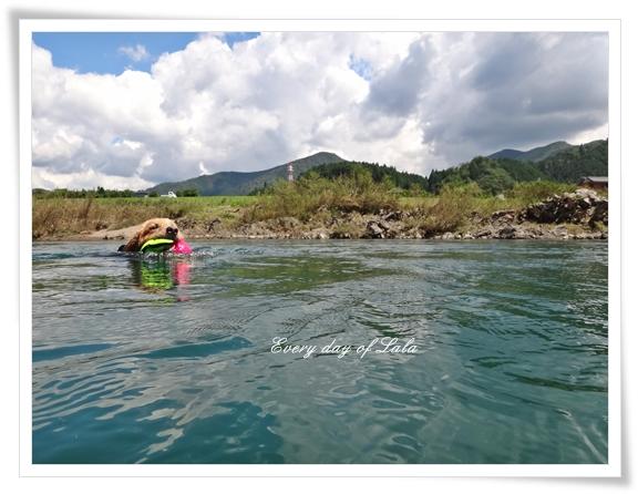 川を泳ぐ201409