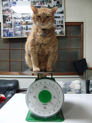 ごろー、体重測定