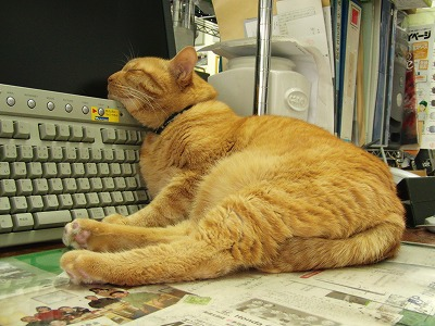 社長代理の昼寝