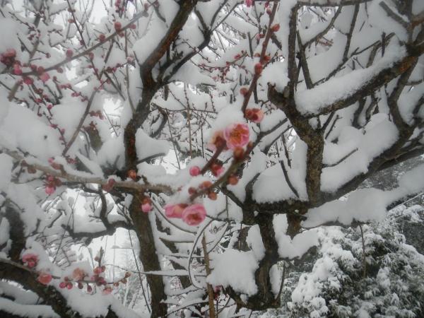 平成26年大雪 104