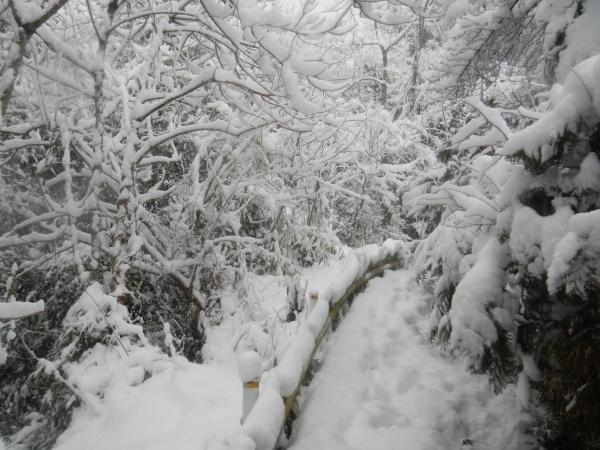 平成26年大雪 128