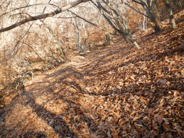 茅ヶ岳 022