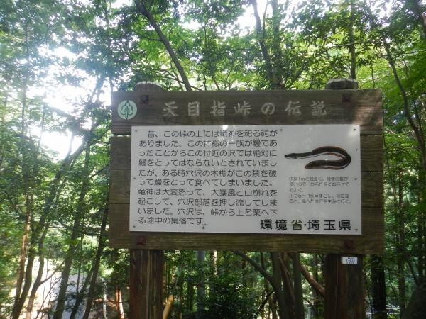 伊豆ヶ岳、子ノ権現 076