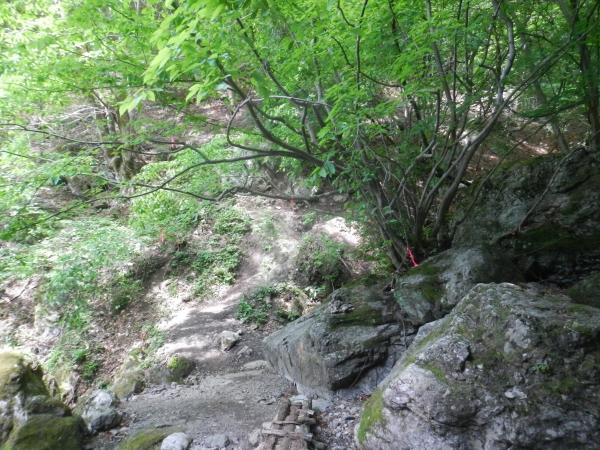 両神山 024