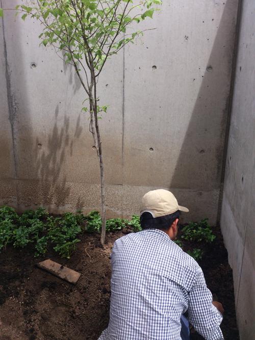 小椋造園植物