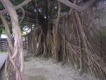 安平樹屋5