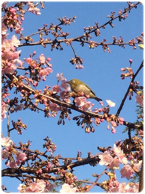 春のきざし04