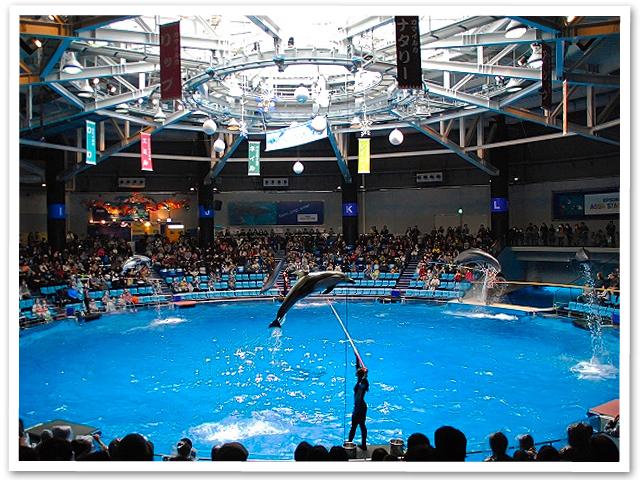 フリマと水族館