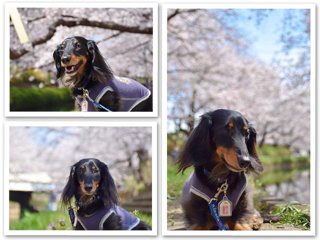 桜【序章】