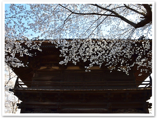桜 【第二章】