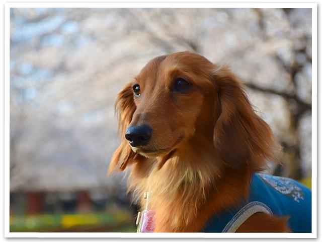 桜 【第三章】