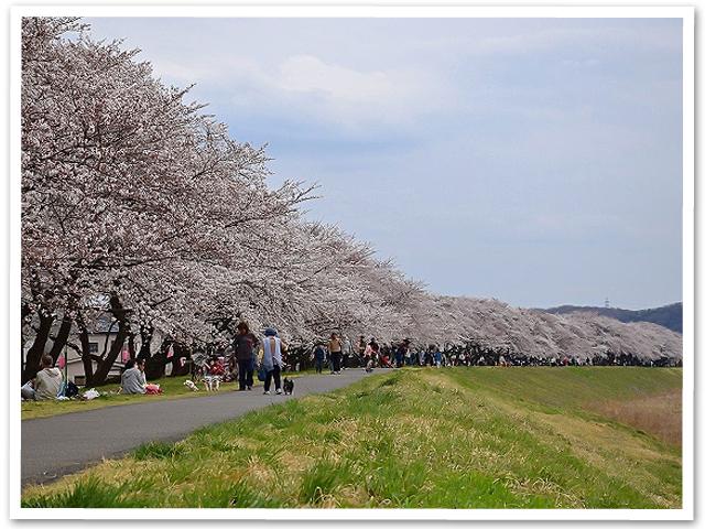 桜 【第五章】