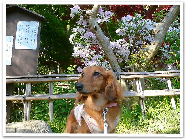 お散歩☆武蔵野の森公園