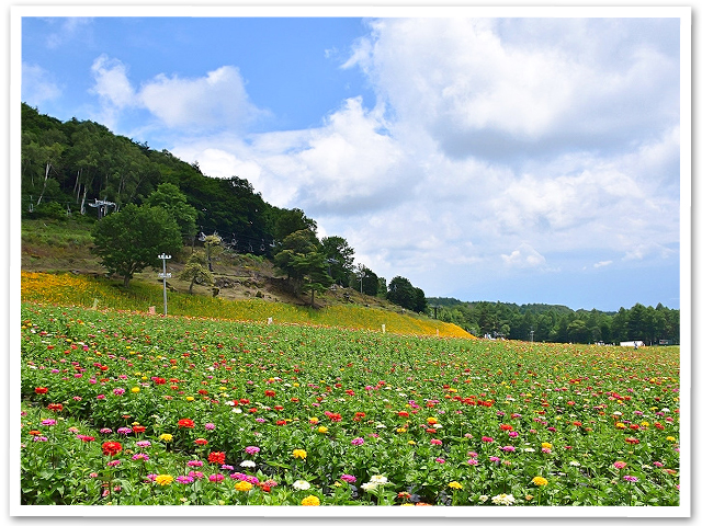 富士見高原ゆりの里