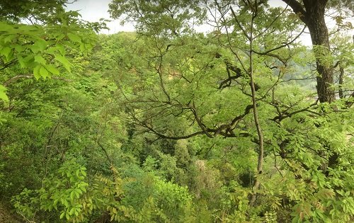 新緑の向山