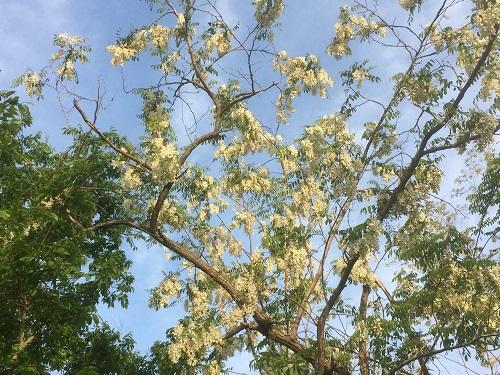 初夏の花木