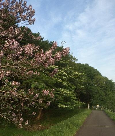 初夏の花木1