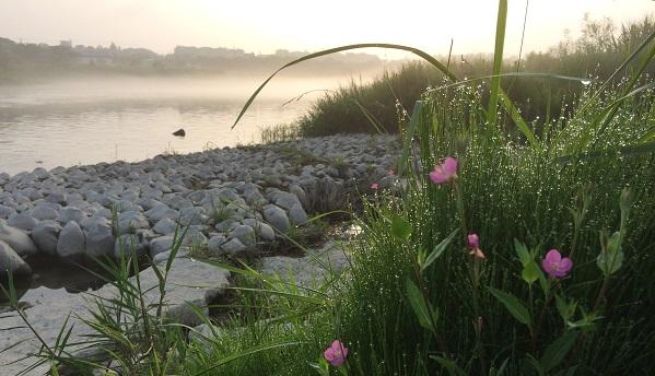 羽村の堰 川霧2