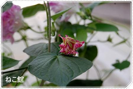blog2_201407051416432f5.jpg