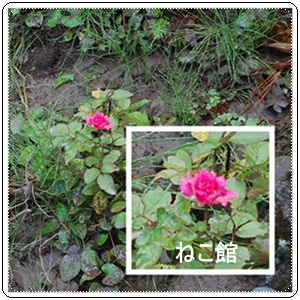 blog2_2014071210281586b.jpg