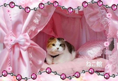 blog6_2014021910081973c.jpg