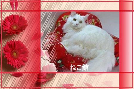 blog6_20140507150042767.jpg
