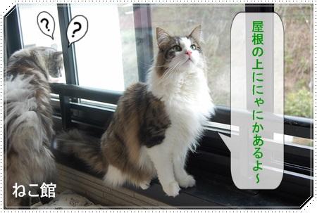 blog6_201408191420415b0.jpg