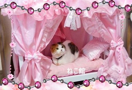 blog7_20140219100820b0f.jpg