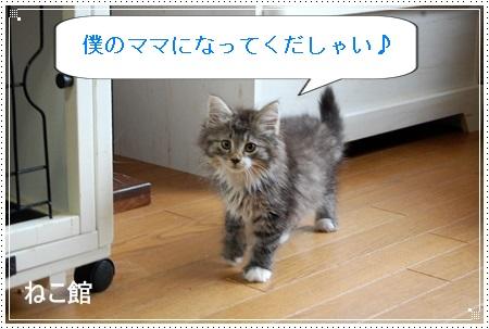 blog8_201405252301274e8.jpg