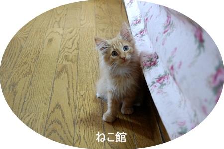blog8_20140817162347cdf.jpg