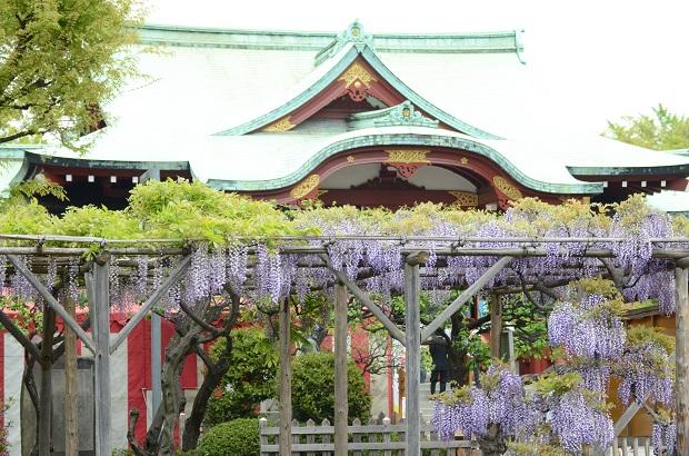 亀戸天神社 20140429 (5)