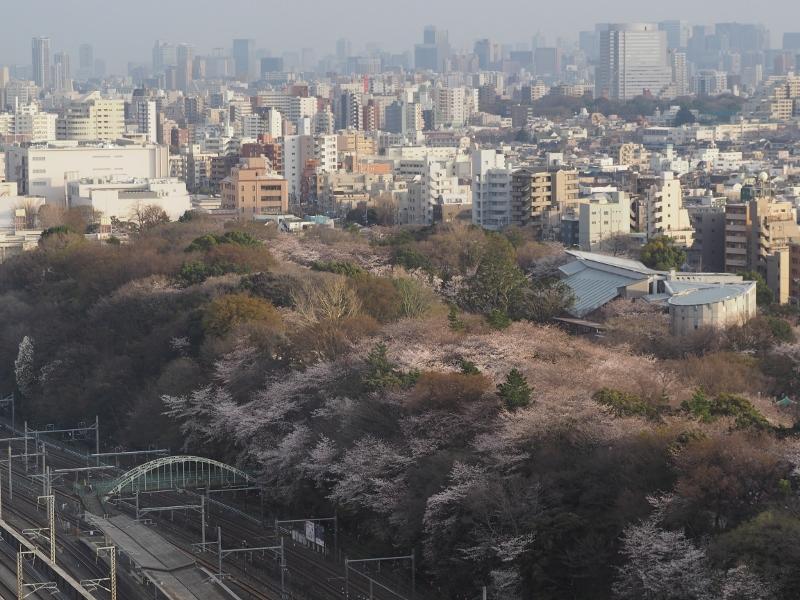 oji_0041f.jpg
