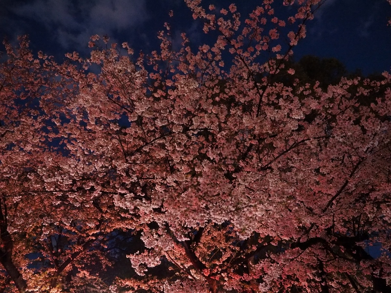 u-sakura_0013f.jpg
