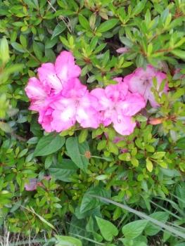 20140526花