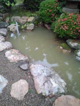 20140613池の水 抜きました。