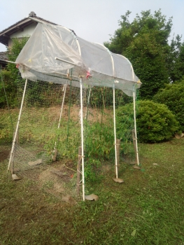 20140630トマトの網