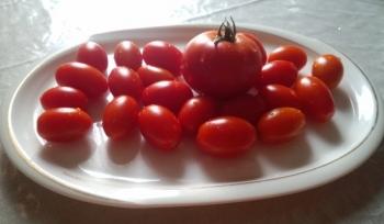 20140722朝どりトマト
